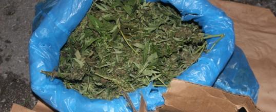 Oduzeto preko 3 kilograma Cannabisa u Gračanici