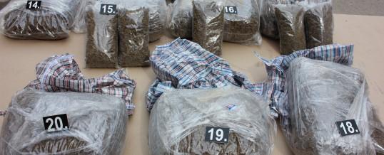 Prilikom pretresa pronađeno oko 70 kg opojne droge canabis sativa- skank