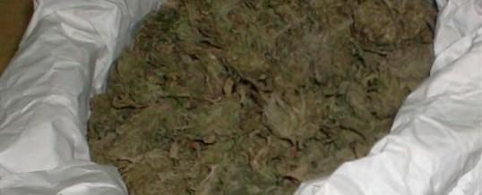 """Oduzeta biljna materija koja svojim izgledom asocira na """"marihuanu"""""""